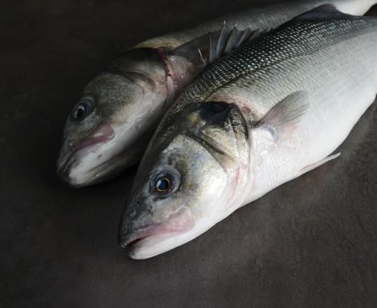 photographie culinaire poisson paris montreuil